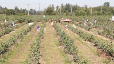 Photo of Працювали за тарілку їжі: на Херсонщині заробітчани опинились у трудовому рабстві