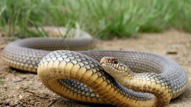 Photo of Через укус змії до лікарні потрапив 8-річний мешканець Сколівщини
