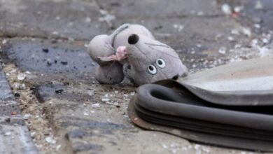 Photo of На трасі Львів-Краковець під колеса скутера потрапила 2-річна дівчинка