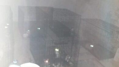 Photo of Клітки з великою кількістю котів у гаражі: поліція з'ясовує усі обставини і причетних