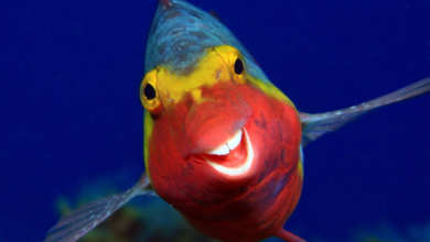 Photo of Найсмішніші фото тварин 2020: оголосили фіналістів конкурсу Comedy Wildlife Photography Awards