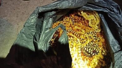 Photo of Тонна каміння у мішках: СБУ блокувала контрабанду бурштину
