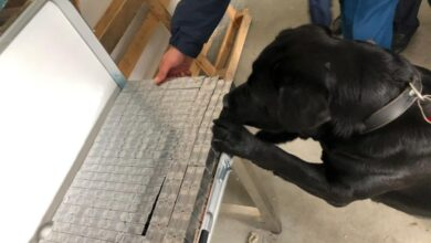 Photo of Собака галицьких митників знайшов контрабанду сигарет, сховану у столі