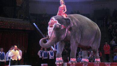Photo of Депутати міськради Львова підтримали петицію про заборону тварин у цирках