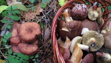 Photo of Через отруєння грибами на Сколівщині троє дітей потрапили до реанімації
