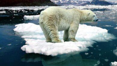 Photo of Світ рухається до того, що влітку в Арктиці взагалі не буде льоду, – вчені