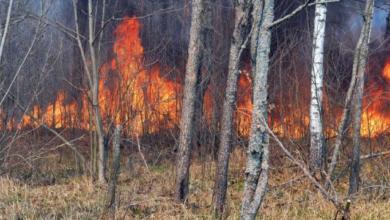 Photo of В Україні оголосили надзвичайний рівень пожежної небезпеки