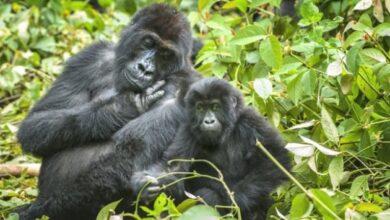 Photo of Популяції диких тварин скоротилися більш ніж на дві третини