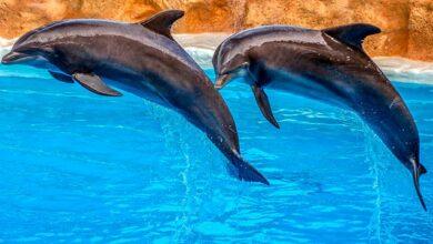 Photo of У Франції заборонили відкриття дельфінаріїв та розведення норок