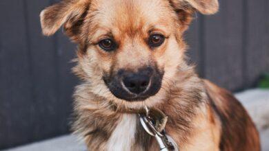 Photo of Кнопочка Гудвін та старенький добряк Хенк. 10 собак шукають дім