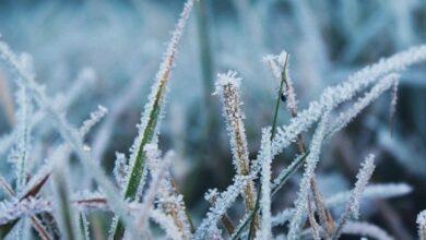 Photo of На Львівщині прогнозують заморозки