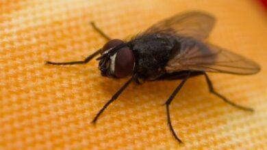 Photo of Пенсіонер підірвав свій будинок, намагаючись вбити муху