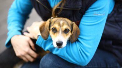 Photo of У Львові нарахували понад 200 безпритульних собак