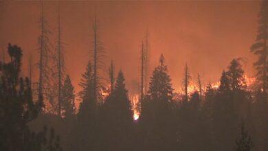 Photo of Лісові пожежі в американському Орегоні забрали життя десятки людей