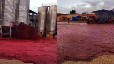 Photo of В Іспанії випадково розлили 50 000 літрів червоного вина