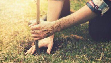Photo of В Україні за день висадять мільйон дерев. Мешканців Львівщини запрошують долучатися
