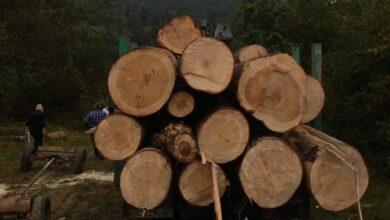 Photo of Експрацівника лісгоспу на Старосамбірщині впіймали на незаконній рубці дерев