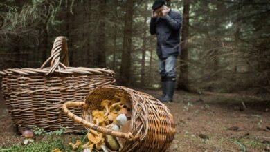 Photo of У лісі на Дрогобиччині рятувальники розшукали зниклого грибника