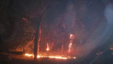 Photo of Пожежі в Луганській області: у регіоні залишився один активний осередок вогню